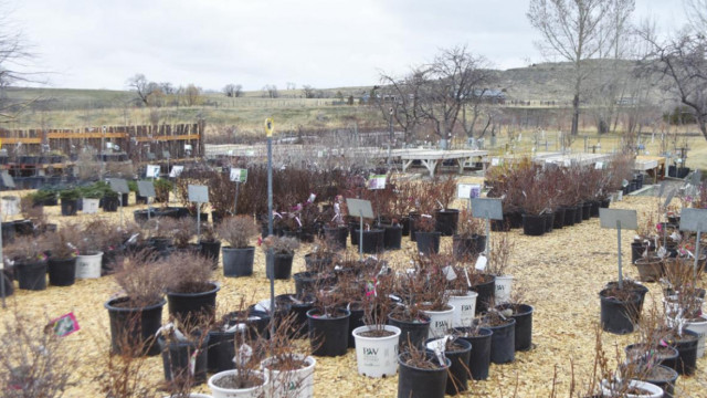 Local nursery specializes in plants native to Montana