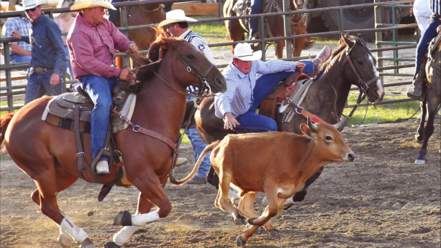 RODEO RIDES ON